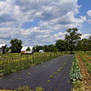 Amish Farm And Garden Art Print
