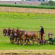 Amish Farmer Art Print by Guy Whiteley