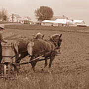 Amish Farmer Art Print
