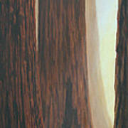 Sequoia Trees - Among The Giants Art Print by Crista Forest
