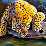 Amur Leopard  Spotted Something Art Print