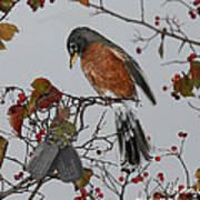 An American Robin Remembers Art Print