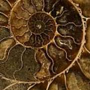 An Ancient Ammonite Pattern II Art Print