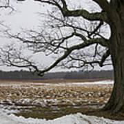 An Appleton Tree And Field In Winter Art Print