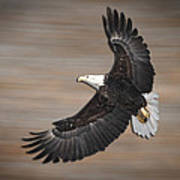 An Artistic Presentation Of The American Bald Eagle Art Print