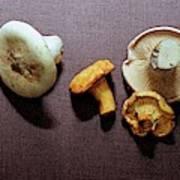 An Assortment Of Mushrooms Art Print