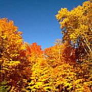 An Autumn Of Gold Art Print