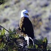 An Eagle In The Sun Art Print