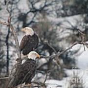 An Eagle Pair  Art Print