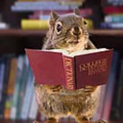 An Educated Squirrel Art Print