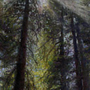 An Enchanted Forest Art Print