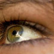 An Eye For Beauty Art Print