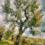 An Old Olive Grove Art Print