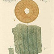 Anatomy Of A Straw Art Print