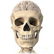 Anatomy Of Human Skull, Cutaway View Print by Leonello Calvetti