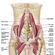 Anatomy Of Iliopsoa, Also Known Art Print