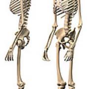 Anatomy Of Male Human Skeleton, Side Art Print