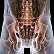 Anatomy Of The Hip Bones Art Print