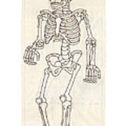 Anatomy Scrolls - Front Art Print