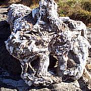 Ancient Gnarled Driftwood - Oregon Beach Art Print