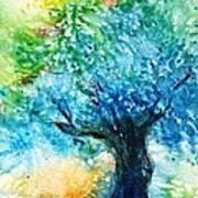 Ancient Olive Tree  Athenas Gift  Art Print