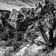 Ancient Witness Art Print