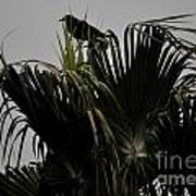 And A Crow Oh Oh In A Palm Tree Art Print