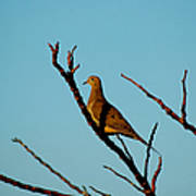 And A Dove In A Tree Art Print