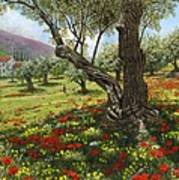 Andalucian Olive Grove Art Print