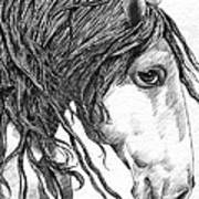 Andalusian Horse Art Print
