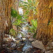 Andreas Creek In Andreas Canyon In Indian Canyons-ca Art Print