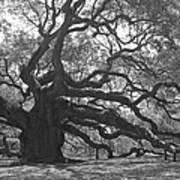 Angel Oak II - Black and White Art Print