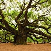 Angel Oak Tree 2009 Art Print by Louis Dallara