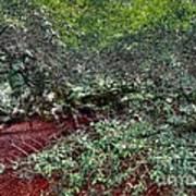 Angel Oak Tree 3 Art Print