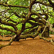 Angel Oak Tree Branches Art Print