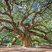 Angel Oak Tree In Charleston Sc Art Print