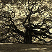 Angel Oak Tree Sepia Art Print