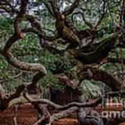 Angel Oak Tree Treasure Art Print