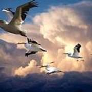 Angels In Flight Art Print
