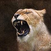 Angry Lioness Art Print