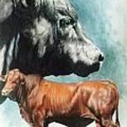 Angus Cattle Art Print