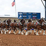 Anheuser Busch Clydesdales Pulling A Beer Wagon Usa Rodeo Art Print