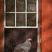 Animal - Bird - Chicken In A Window Art Print