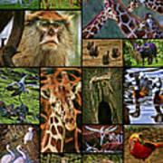 Animal Collage Art Print