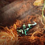 Animal - Frog - Lick The Green Frog Art Print