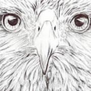 Animal Kingdom Series - Bird Of Prey Art Print