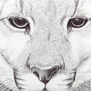Animal Kingdom Series - Mountain Lion Art Print