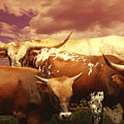 animals - cows- Longhorns La Familia  Art Print