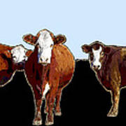 Animals Cows Three Pop Art With Blue Art Print