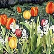 Ann's Tulips Art Print